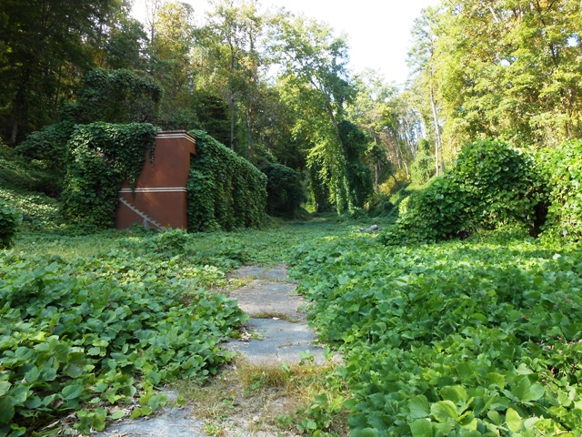 Kudzu fills the abandoned campus.