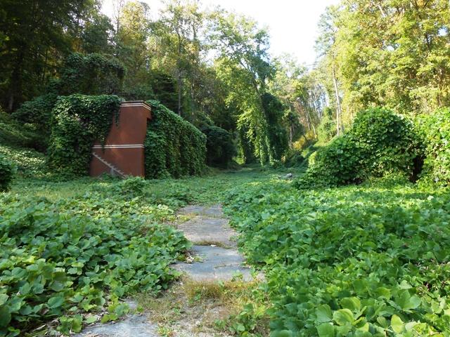 Kudzu fills the abandoned campus.