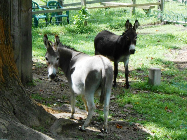 We said hello to some sweet donkeys while we were there.