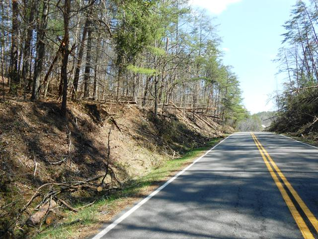 Note the downed trees along the side.