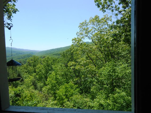 View from the dining room window.