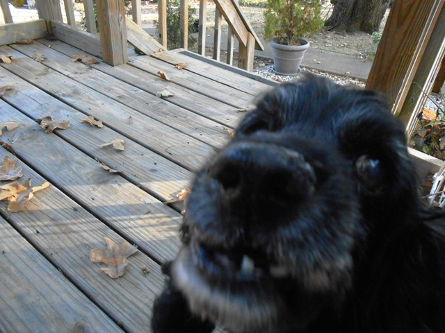 And even better to get a greeting by our dog Cindy.