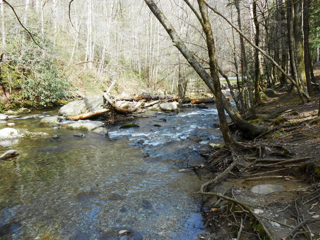 The Smoky Mountains are full of beauty.